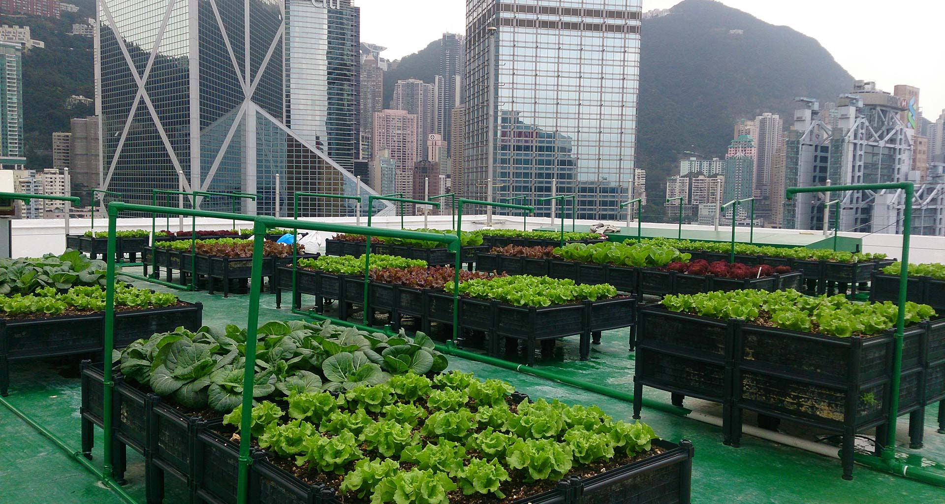 Why Use RIOCOCO Products For Rooftop Gardening As Growing Medium?